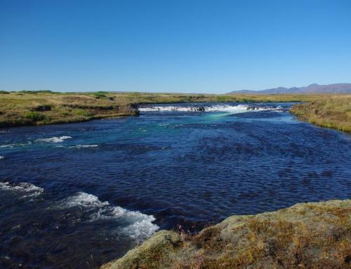 Arctic char river Bruara