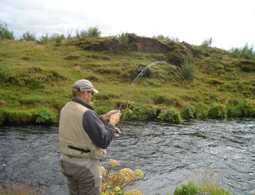 Brown trout river Galtalaekur