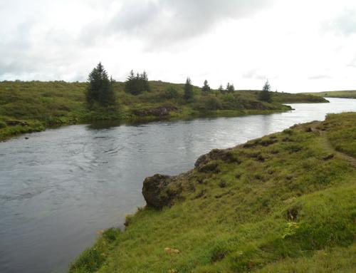 Salmon & arctic char river Sog