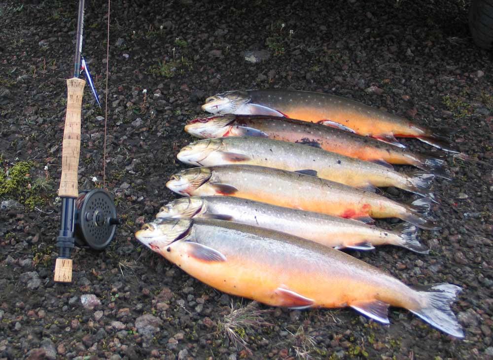 Lake Hlidarvatn - Fly Fishing Tours Iceland - gofishing.is