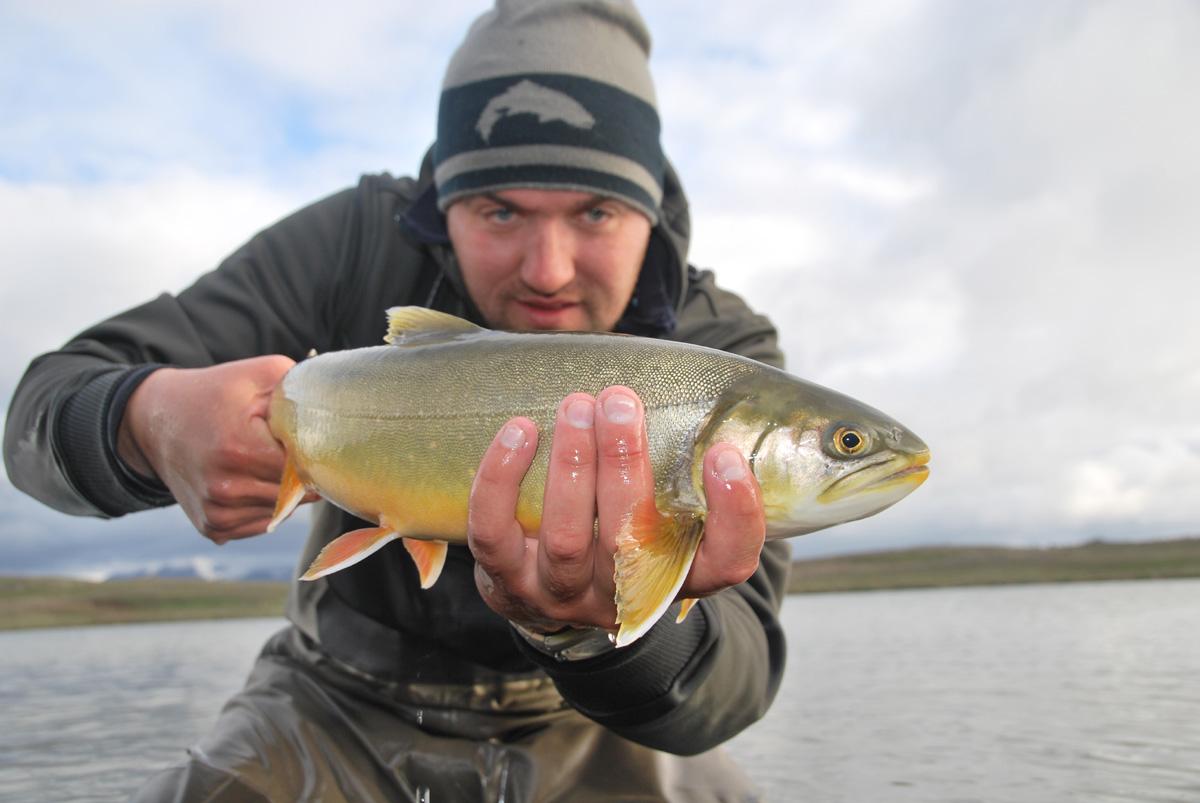 Arnarvatnsheidi - Arctic Char - gofishing.is