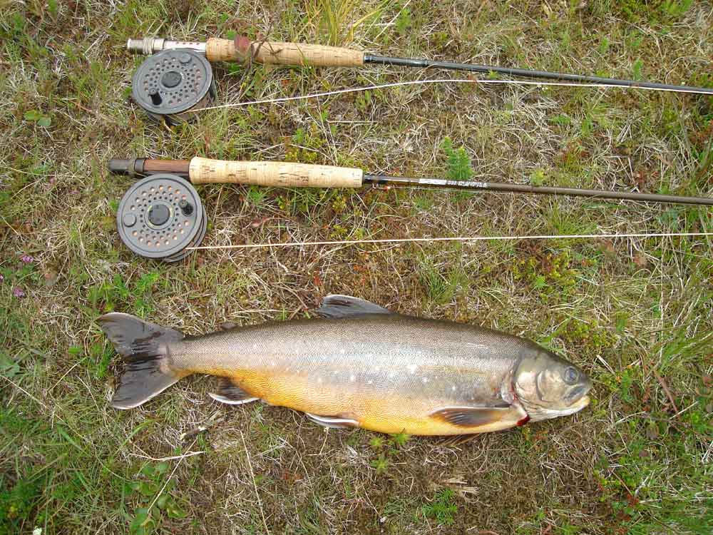 Lake Ellidavatn - Arctic Char - gofishing.is
