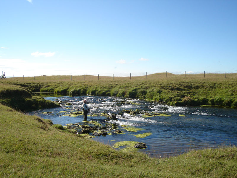 River Minnivallalaekur - Fly Fishing Tours Iceland - Brown Trout - gofishing.is